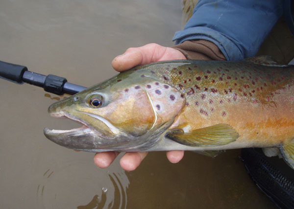 Chama Fishing Trout River