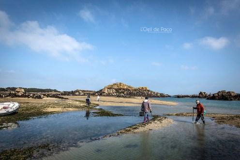 Photo #126 - La marée du siècle