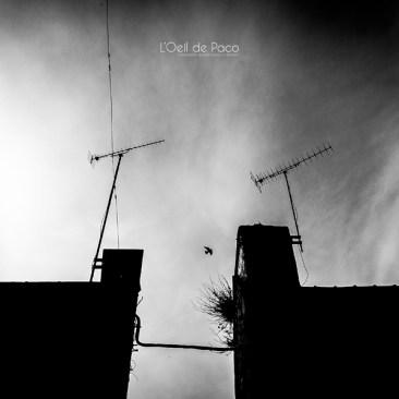 Photo #106 - L'oiseau qui voudrait s'enfuir