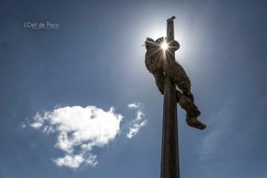 Photo #175 - Un Pheuillu dans le ciel