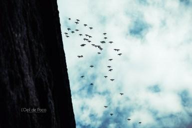 Photo #268 – Nuée d'oiseaux
