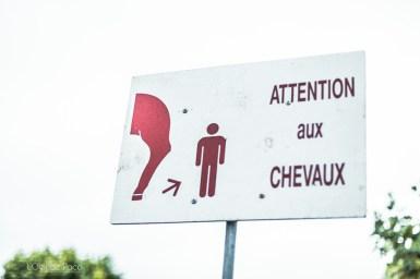 L'Oeil de Paco - Foire aux Poulains - Plaintel - 2015 (24)