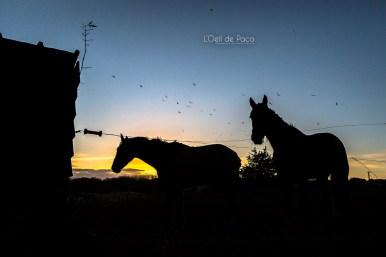 Photo #316 – Wild horses