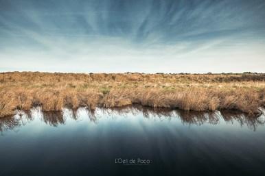 Photo #340 – Derrière les marais, la mer