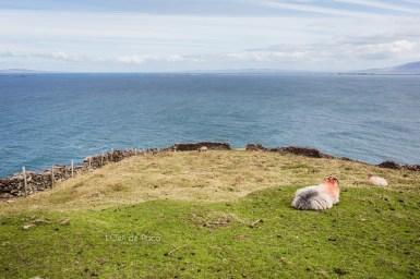 L'Oeil de Paco - Peninsule de Dingle - Irlande (14)