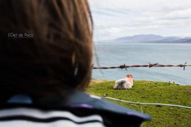 L'Oeil de Paco - Peninsule de Dingle - Irlande (15)