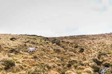 L'Oeil de Paco - Peninsule de Dingle - Irlande (154)