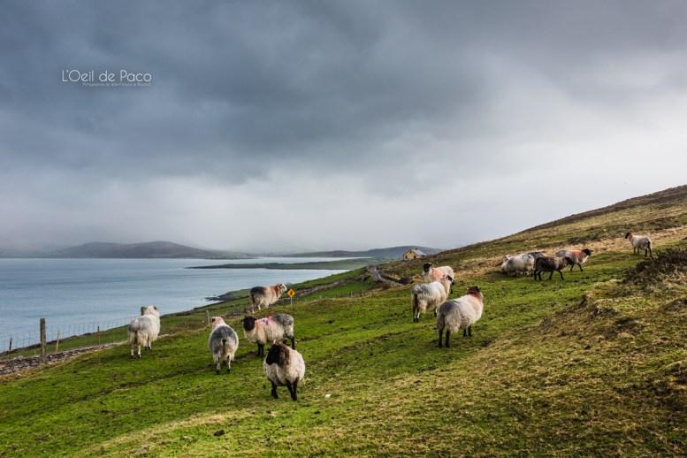 L'Oeil de Paco - Peninsule de Dingle - Irlande (171)