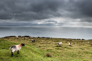 L'Oeil de Paco - Peninsule de Dingle - Irlande (29)