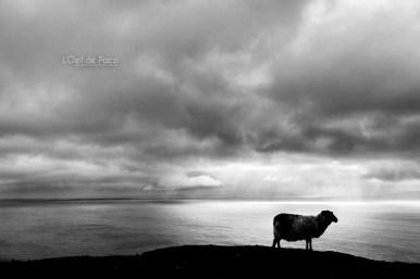 L'Oeil de Paco - Peninsule de Dingle - Irlande (32)