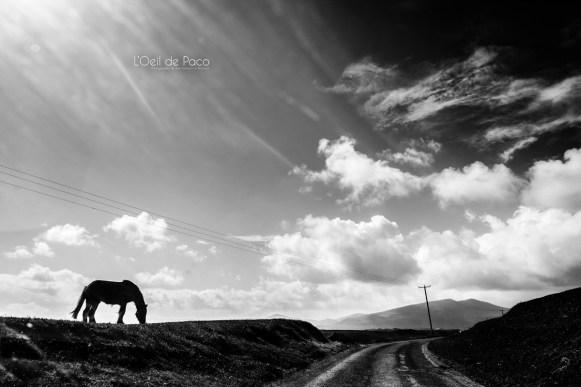 L'Oeil de Paco - Peninsule de Dingle - Irlande (87)