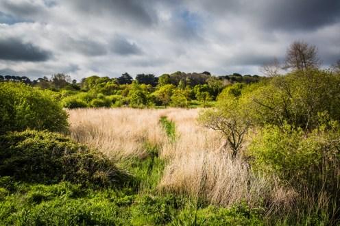 L'Oeil de paco - Marais de Gouermel - Plougrescant (2)
