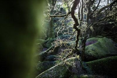 L'Oeil de Paco - Monts d'Arrée 2019 (11)