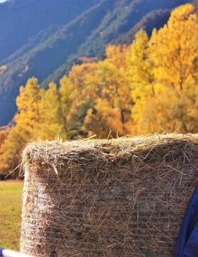 Escapada a la naturaleza de Andorra
