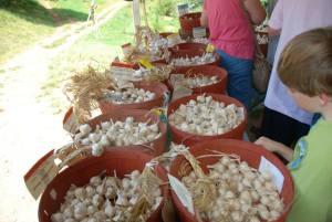 garlic fest loganberry