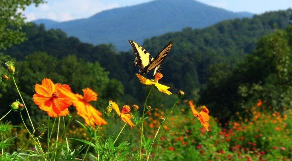 sunflower field copy