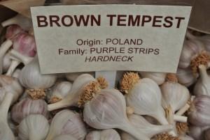 brown-tempest-copy