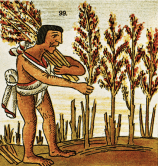 Aztec with weat.gif
