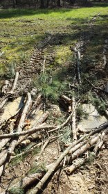 Before: I thought I should lay the logs perpendicular to the stream, but when I ran over them, they spread apart....