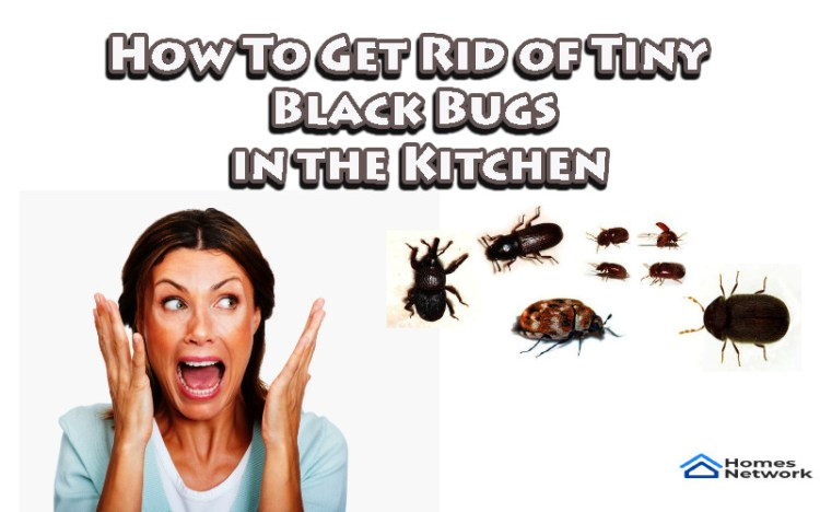 Kitchen Bugs How To Get Rid Of Tiny Black Bugs In The Kitchen