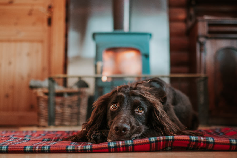 Dog-friendly-holiday-cabins