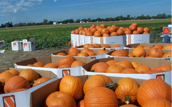 The Halloween Supply Chain | Logistics Viewpoints