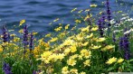 wild-flowers-and-river_00441323