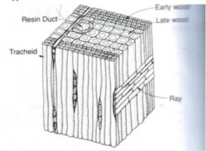 composite cell diagram 1997 f150 starter wiring about wood | logs to lumber