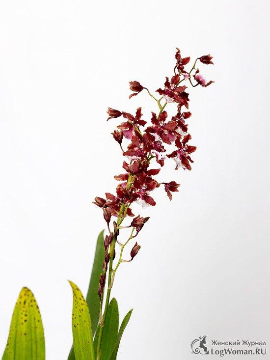 Plantele parfumate pentru casă sunt arome naturale. Plante parfumate de interior