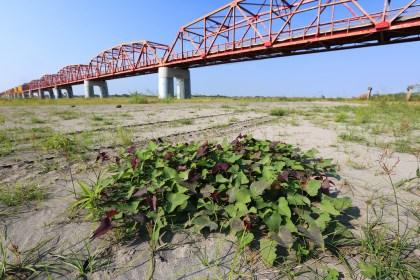 memory-of-silou-bridge
