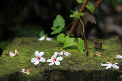 a special tong blossom scene