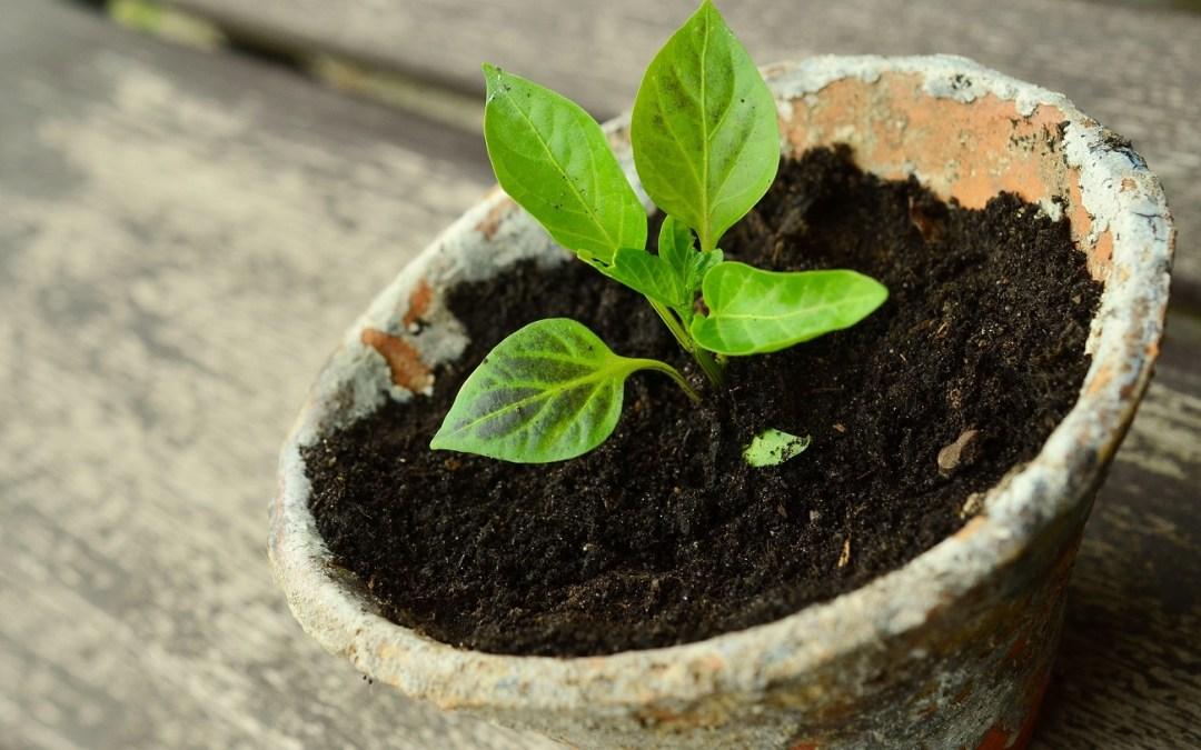Pflanzen tauschen an der Blauen Bude