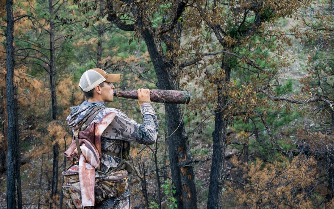 Guided Elk Hunt in New Mexico