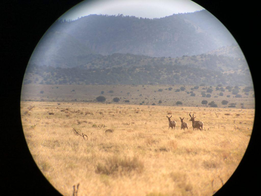 Binoculars View Of Elk Group