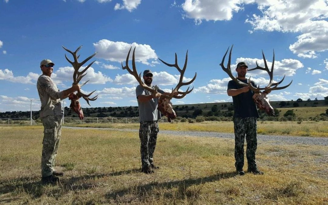 Planning A New Mexico Elk Hunt: What You Need to Know