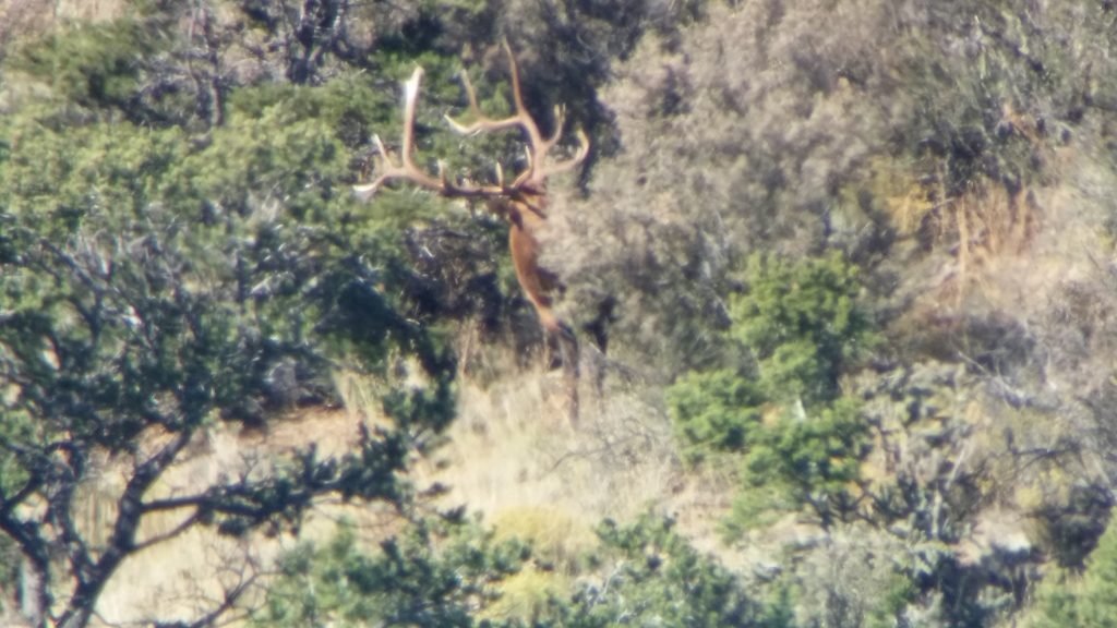 Hunting Post-Rut Elk in New Mexico