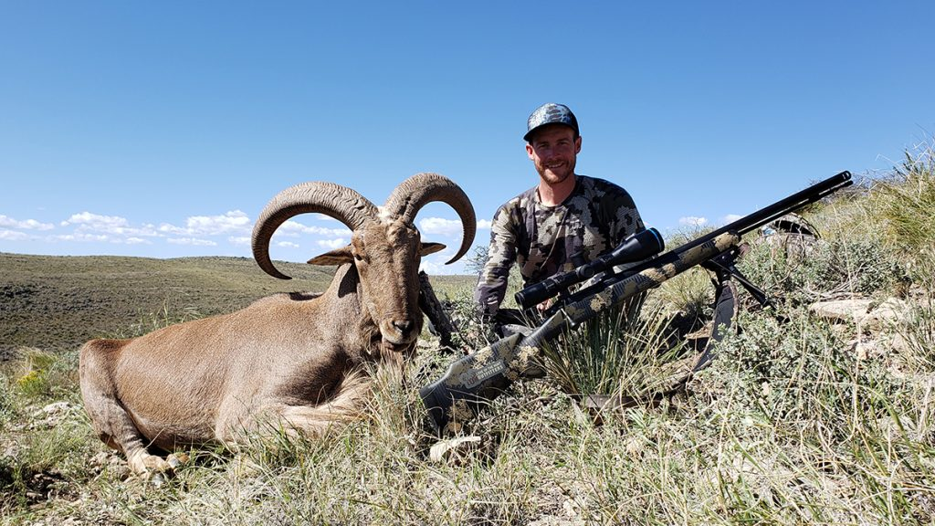 Hunt Barbary Sheep in New Mexico