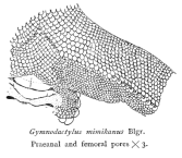 Pores on the skin are often used in classification.