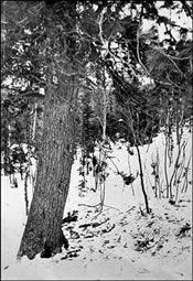 Lugar donde fueron encontrados los primeros cuerpos