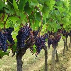 loireleisureholidays_wine_tours01