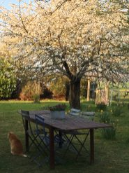 table in spring