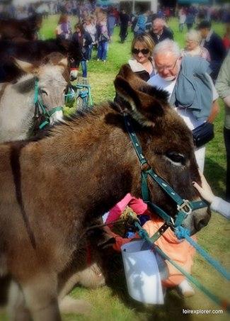 Foire aux ânes Poulaines Indre Berry avec LoireXplorer âne du Bourbonnais