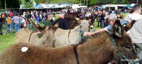 Foire des ânes Poulaines Indre Berry avec LoireXplorer