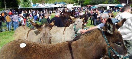 Foire aux ânes de Poulaines Indre Berry avec LoireXplorer