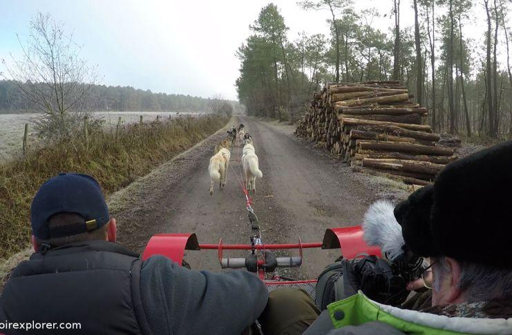 cani kart touraine chien de traineau husky sibérien latitude Nordique