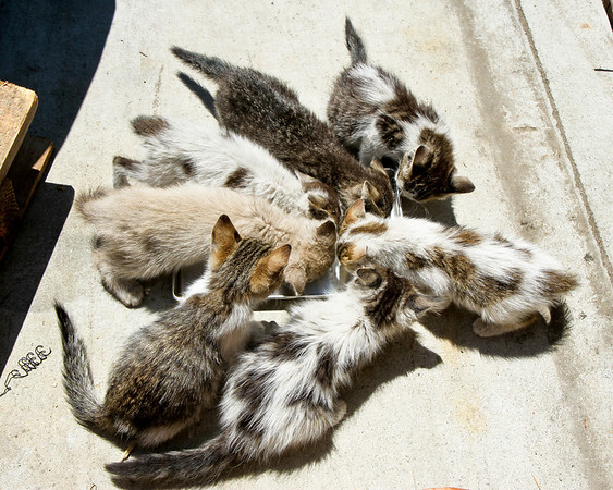 7 kittens