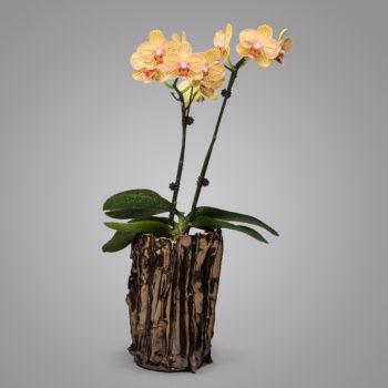 Image: Chestnut Bronze Orchid Pot - Lois Sattler