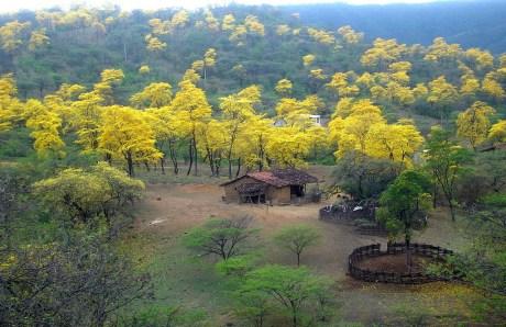 Loja Florecimiento Guayacanes Mangahurco