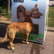 【凄い!】リサイクルして野良犬を救う!超画期的な自動販売機!