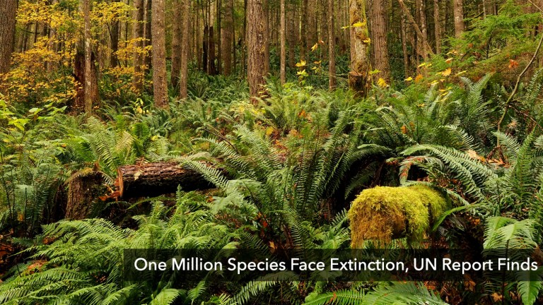 One Million Species Face Extinction: UN Report